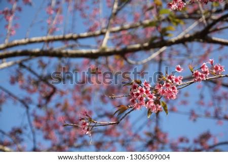 Flower Of Life