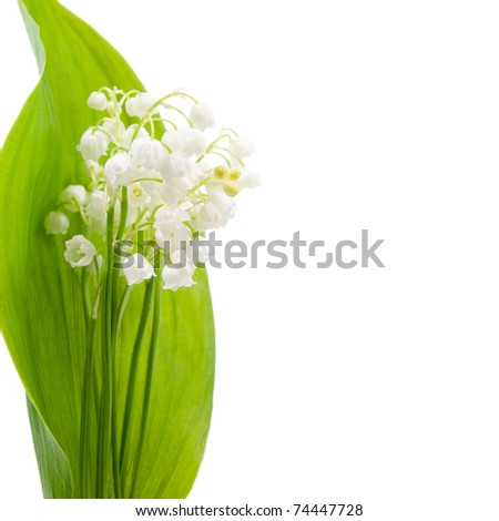 free stock photo in high resolution lily of the valley