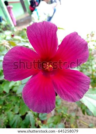 Flower Of Love #645258079