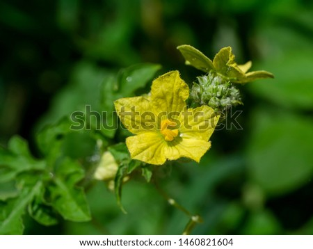 Flower of Organic agriculture, Watermelon fruit is growing in the farm. #1460821604