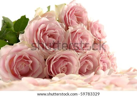flower of pink roses with petals on white background