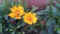 flower of Rajghat new Delhi india