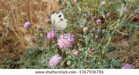 flower of shrub #1367936786