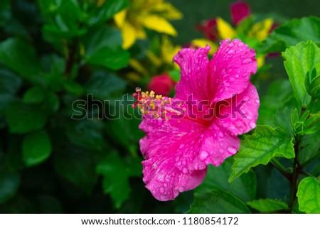 flower of the rain #1180854172