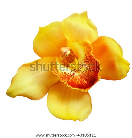 Flower of yellow orchid isolated on white background, with clipping path.