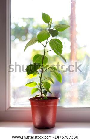 flower on a windowsill in a pot
