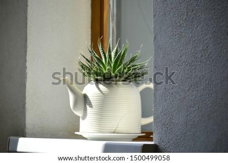 Flower on a windowsill in the sunlight