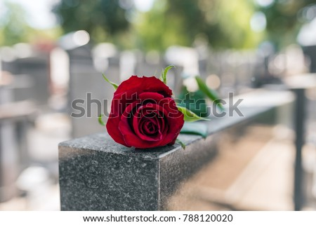 Flower on memorial stone close up