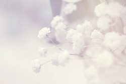 flower on soft pastel color