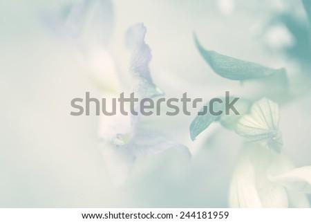 flower on soft sparkle pastel color