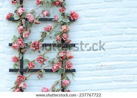 Stock Photo Flower on wall brick