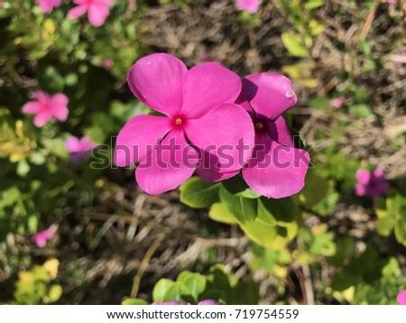 Flower pattern #719754559