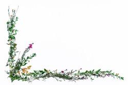 Flower Pattern Boarder Background