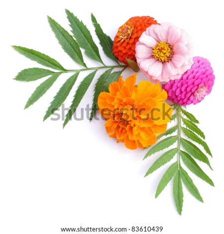 Flower pattern decoration isolated on the white background