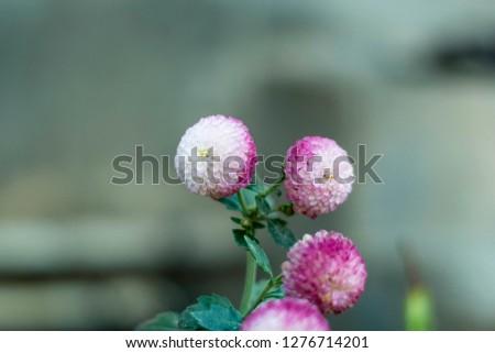 flower pattern white #1276714201