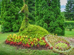 Flower peacock sculpture. The botanical garden from Iasi, Romania.