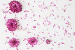 Flower petals on white paper background