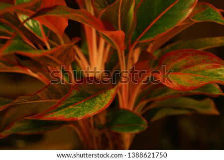 Flower pics, close up flower