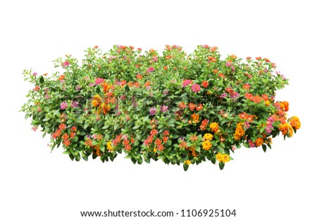 flower plant bush tree isolated with clipping path #1106925104