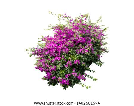 flower plant bush tree isolated with clipping path on white background #1402601594