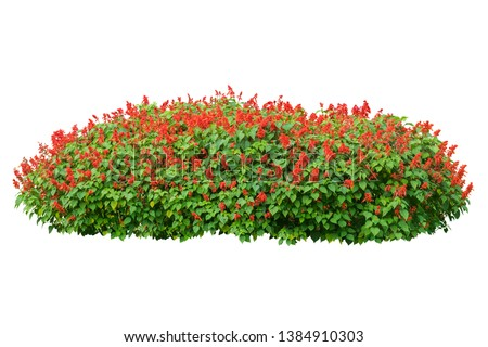flower plant isolated with clipping path on white background #1384910303