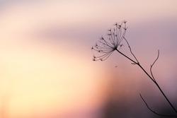 flower plant on summer morning sunrise