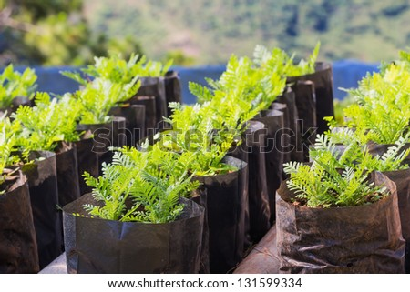 Flower plant propagation, new young flower plant in separate pot