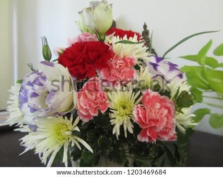 flower pot delight #1203469684