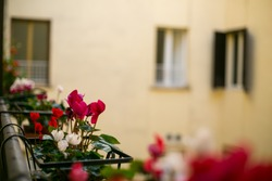 Flower pot on blocony in the outside,rome Italy.