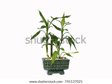 flower pot with bamboo isolated on a white background #745137025