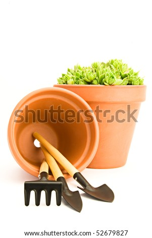 Flower pot with green sempervivum and garden tools isolated on white background