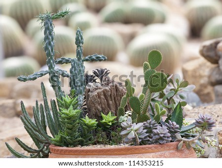 Flower pot with variety of succulents