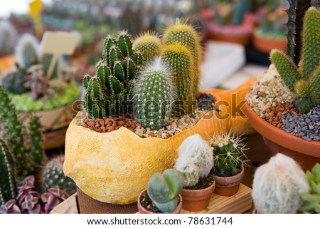 Flower pot with variety of succulents in the plant store