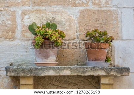 Flower pots on a stone shelf  #1278265198
