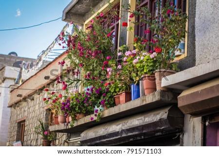 Flower pots on the window in Tibetan house, Ladakh, India #791571103