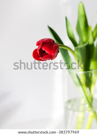 Flower. Red flower. Red tulip flower in a vase. Tulip flower in a vase. Cute red flower. Amazing flower. Red tulip flower. Colored flower. Sunny flower. beautiful flower. Awesome tulip flower. Flower.
