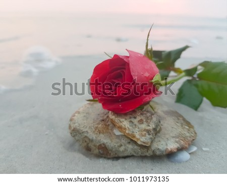 flower red rose on the sand beach