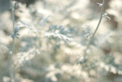 flower , redflower ,white flower,yellow flower,white flower