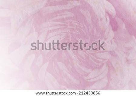 flower retro soft style for background, Chrysanthemum soft background