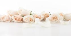 flower rose white  corsage panorama