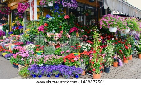 Flower shop Rome, Italy - May 15 2016 #1468877501
