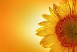 Flower, Single Flower, Sun.