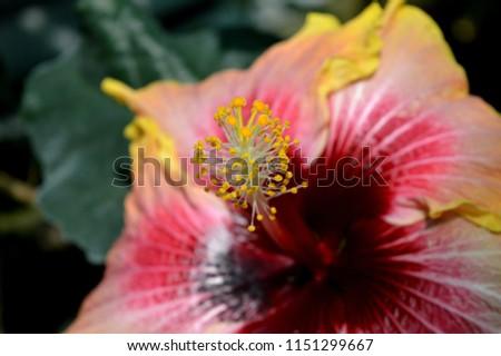 flower stamen closeup #1151299667