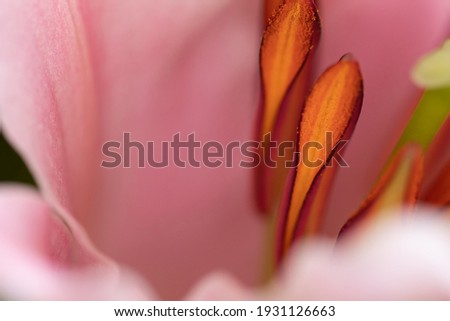 Flower stamens with pollen macro pictures abstract background. Bright colorful organic background. Pistils and stamens with yellow dust pollen Stock photo ©