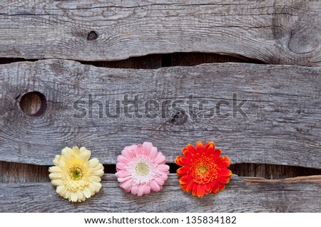 flower structure from below, wooden background