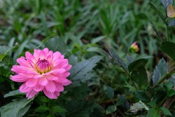 Flower surrounding with the green background, Chiengmai, Thailand
