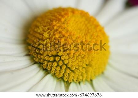 Flower target