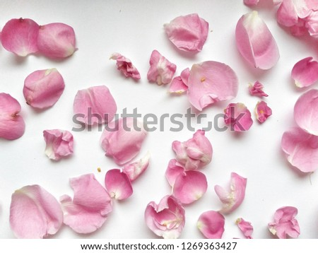 Flower texture for design. Can be used as a background, wallpaper #1269363427