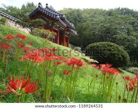 flower wild nature