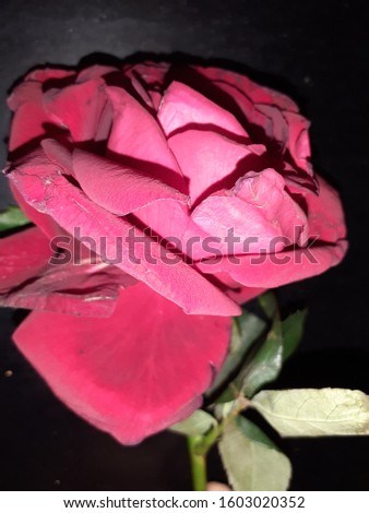 flower with great looking and nice petals with nice shining